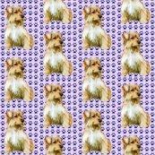 1812296_rrnorfolk_terrier_best_shop_thumb