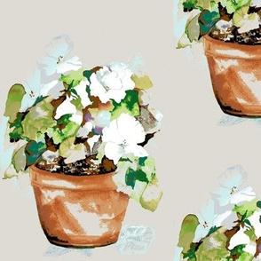 Petunia Cachets