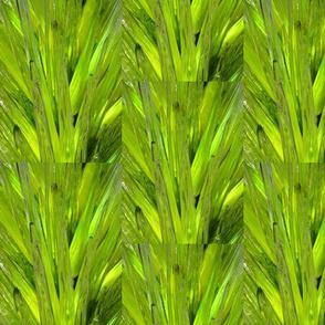 Shiny Green Leaves
