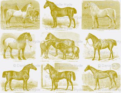 All those Pretty Horses