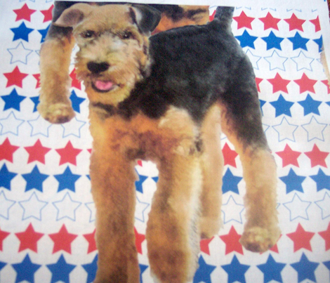 Rrairedale_terriers_with_stars_comment_285277_preview