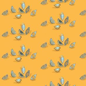 Pigeon Feeding in mango and grey