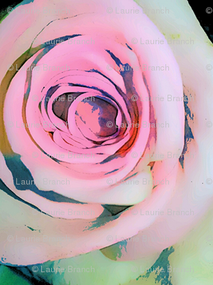 Pretty in Pink (Roses)