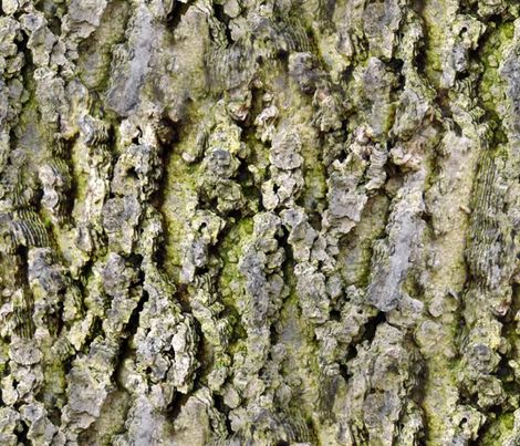 Does That Tree Bark ? fabric by peacoquettedesigns on Spoonflower - custom fabric