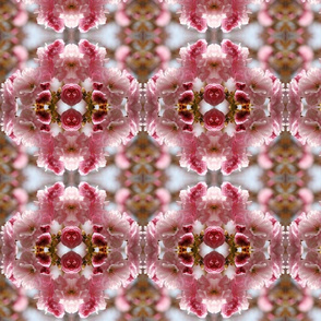 Cherry Blossoms_6326