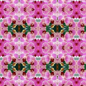 Pink Orchids_1184