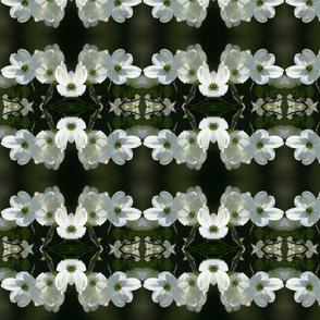 White Dogwood_6850