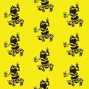 Dart_frog_-_yellow
