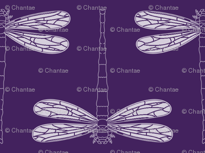dragonfly directional in iolite