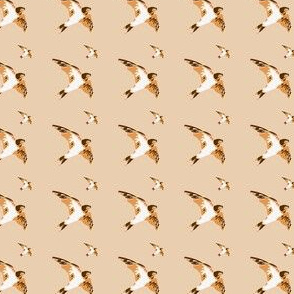 Swallow birds, brown and beige