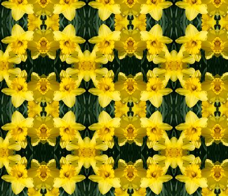 Daffodils_1832 fabric by falcon11 on Spoonflower - custom fabric