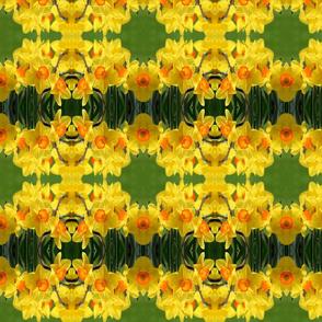Daffodils_6373