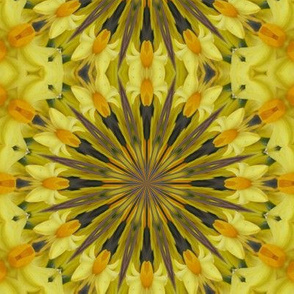 Kaleidescope 0852 Daffodils
