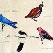 Rbirdswestallfour_ed_ed_shop_thumb