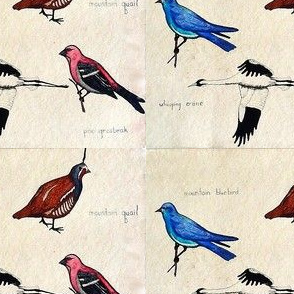 Four Rocky Mountain Birds