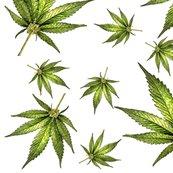 Cannabiswhite_shop_thumb