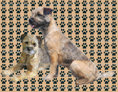 Border Terriers and Pawprints