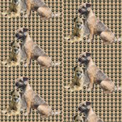 Rborder_terriers_shop_thumb