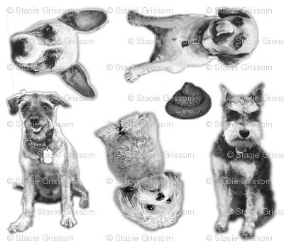 The BarkBox Office Dogs