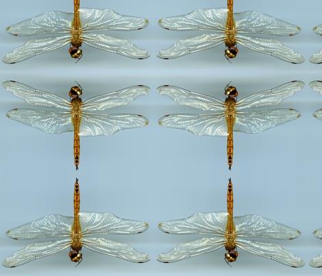 Dragonfly  fabric by ninka on Spoonflower - custom fabric