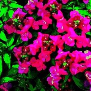 Snapdragon Garden bright