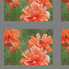 poppies_on_canvas