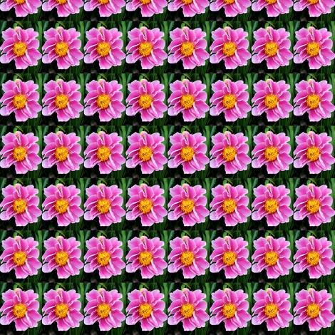 IMG_9976 fabric by lindareeree on Spoonflower - custom fabric