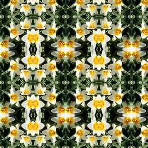 Tulips 5766