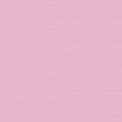 Haddyr ~ Peacoquette Palette Solid