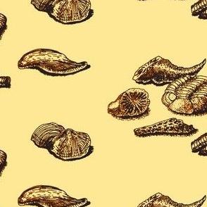 FOSSILS  (onionskin)