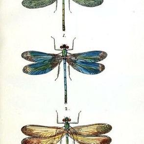 Vintage Lithograph Dragonflies Circa 1845