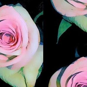 SPOONFLOWER_pink_rose_PNG