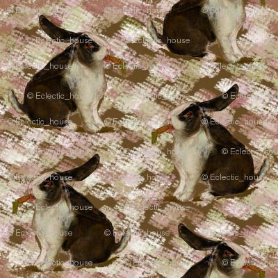 DutchLop Bunny