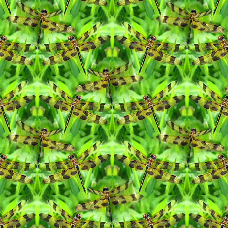 Dragonfly Grass fabric by eclectic_house on Spoonflower - custom fabric