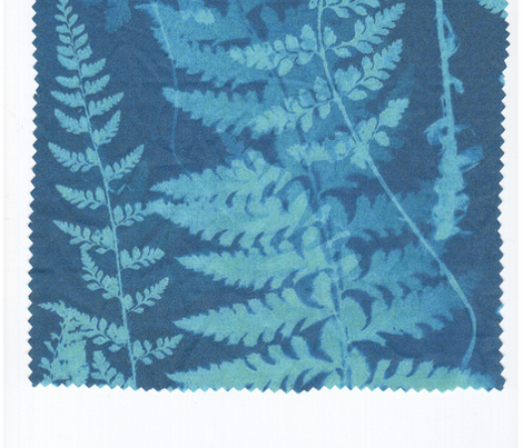 Ferns in Blue Cyanotype