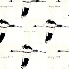 Whooping Crane  (half brick repeat)  Black & White