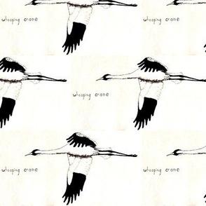 Whooping Crane  (half brick repeat)  Black & White