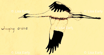 Whooping Crane  (Onionskin)