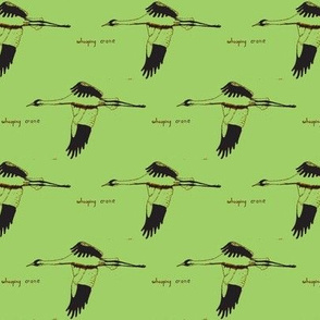 Whooping Crane  (Grass)