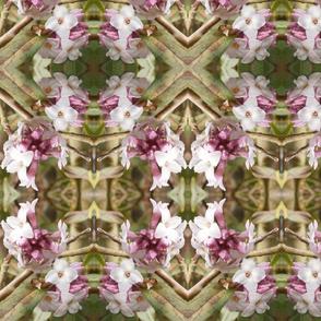"""Floral Fandango"""