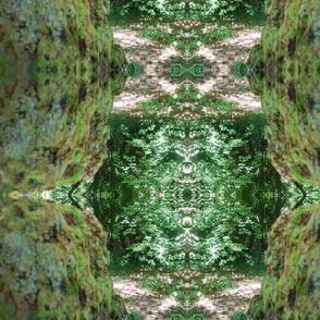 Mossy Vortex