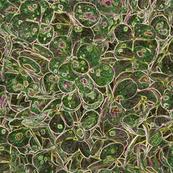 """Hydrangea Green"""