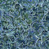 """""""Hydrangea Dark Blue"""""""