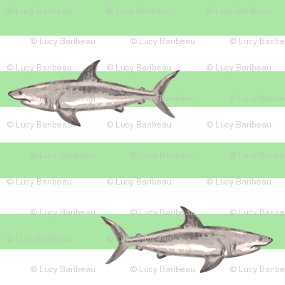 Sharks and green stripes
