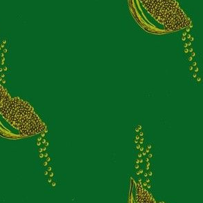 Seeds pine   citron