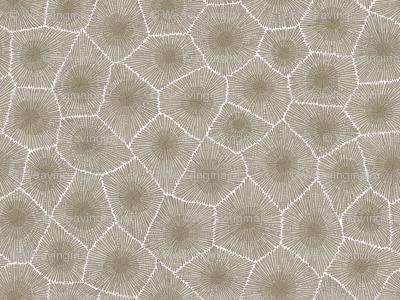 petoskey stone - natural