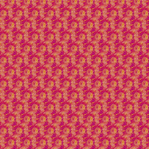 Pincushion Protea, - pink/rust