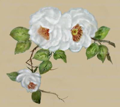Mudd roses
