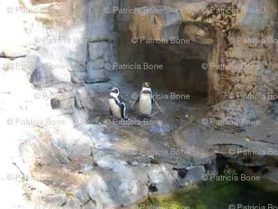 Pinguins__1_