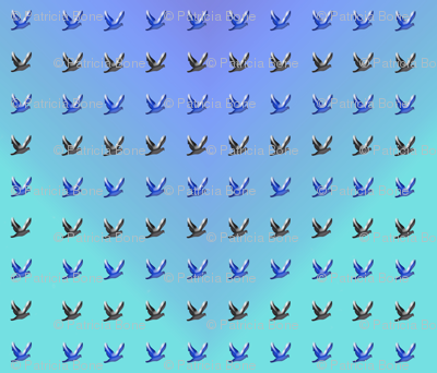 many_birds_in_sky